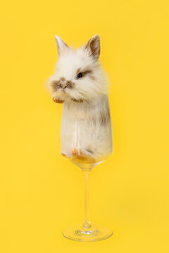 Cute fluffy rabbit in glass on color background