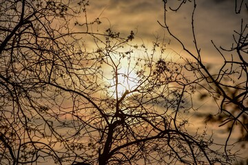 Low Angle View Of Silhouette Bare Tree Against Sky At Sunset Fotobehang
