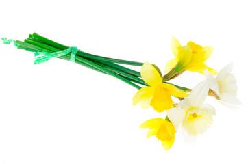 Printed kitchen splashbacks Narcissus Spring garden daffodils on white background. Photo