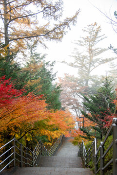 Autumn scene at entrance to Arakura Sengen Shrine, the path leading to the Chureito Pagoda