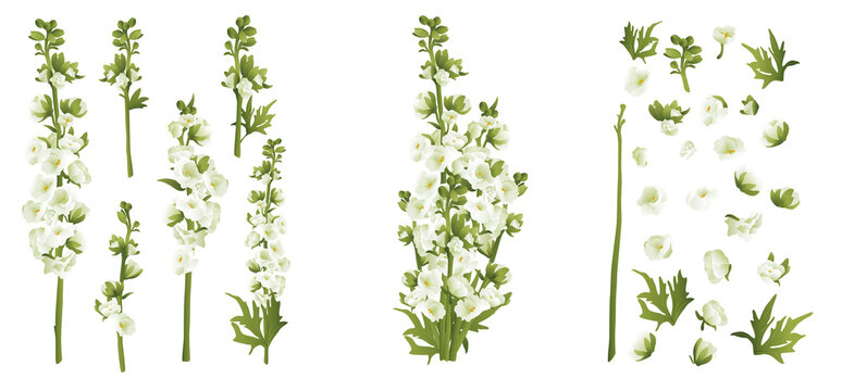 Delphinium larkspur isolated on white compilation 3d vector illustration set. Realistic floral parts, white and green flowers, leafs. Bouquet parts. Alternative medicine, phototherapy. Botanical