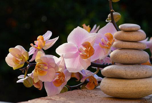 SPA-center. Zen as a lifestyle