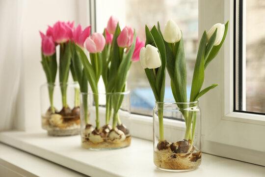 Beautiful tulips with bulbs on window sill indoors