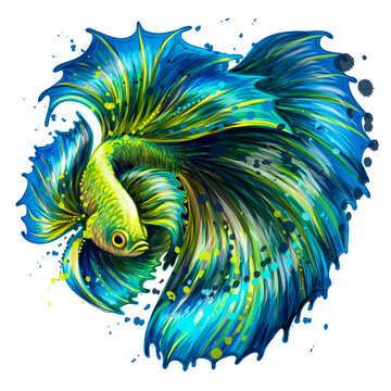 Tropical fish. Color graphic portrait of a fighting fish on a white background in a watercolor style. Digital vector graphics.
