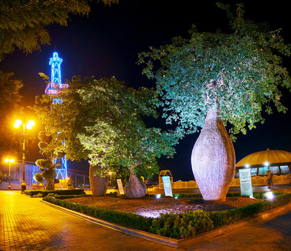 Baobab trees in Milli Park of Baku, Azerbaijan