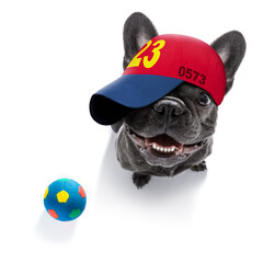 cool baseball cap urban dog