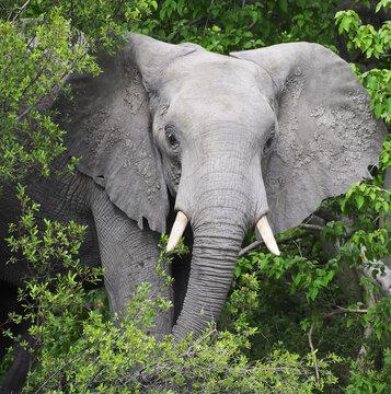 Closeup shot of a elephant in a park