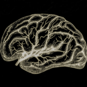 human brain sketch illustration