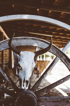Bull Skull in Stable