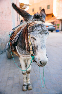 Donkey with carriage in Morocco streets