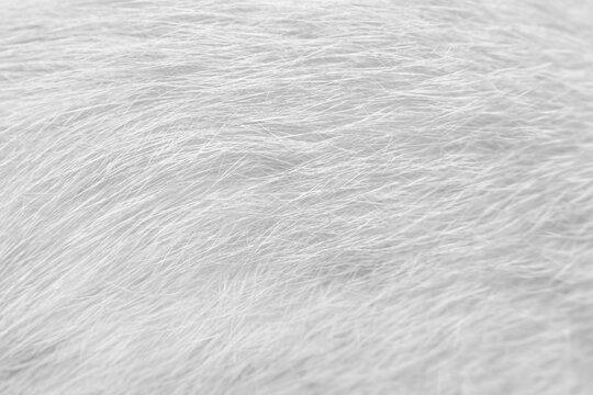 Line patterns fur cat texture white gray  background