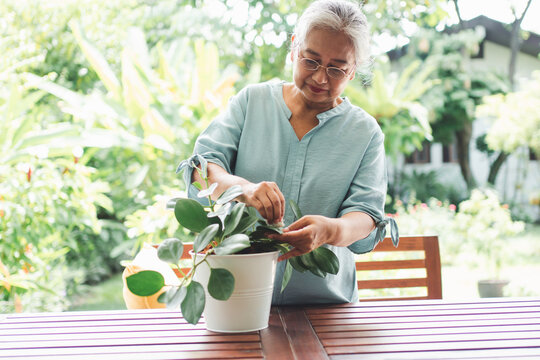 A happy and smiling Asian old elderly woman is planting for a hobby after retirement in a home. Concept of a happy lifestyle and good health for seniors.