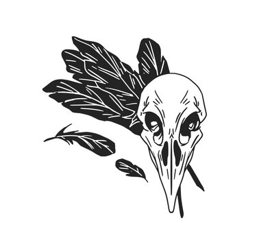 Black and white crow skull with feathers of bird. Raven skeleton for witchcraft and wizardry. Hand drawn vector illustration isolated on white background