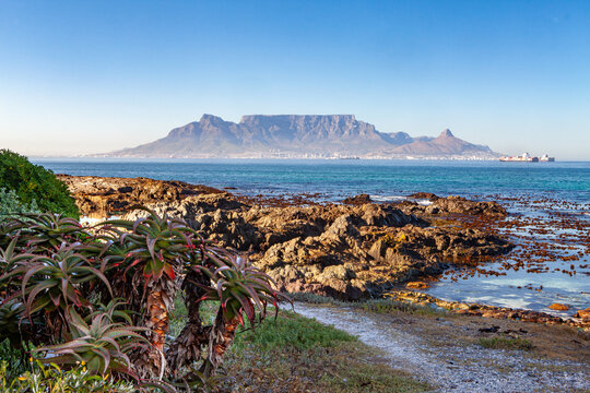 table mountain in cape town south africa scenic view from blouberg in summer with blue sky and aloe in foreground
