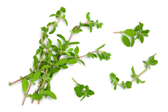 Oregano or marjoram leaves isolated on white background with clipping path and full depth of field. Top view. Flat lay