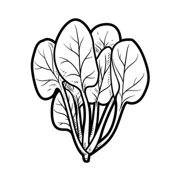 Spinach bundle linear drawing on white background