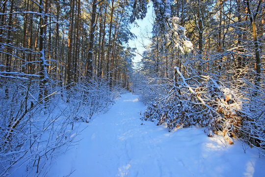 Beautiful winter landscapes in Poland.