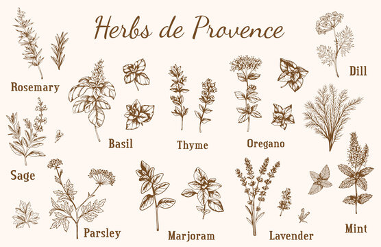 Provencal spices and herbs.