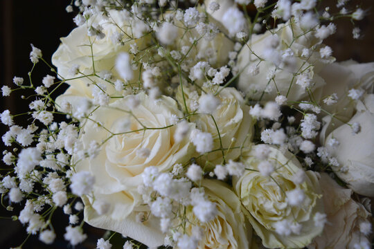 White roses and gypsophila on a black background. Beautiful festive bouquet.