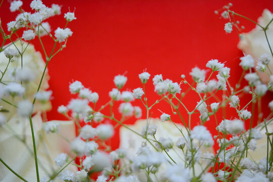 Beautiful floral arrangement. White roses and gypsophila on a red background. Vivid composition