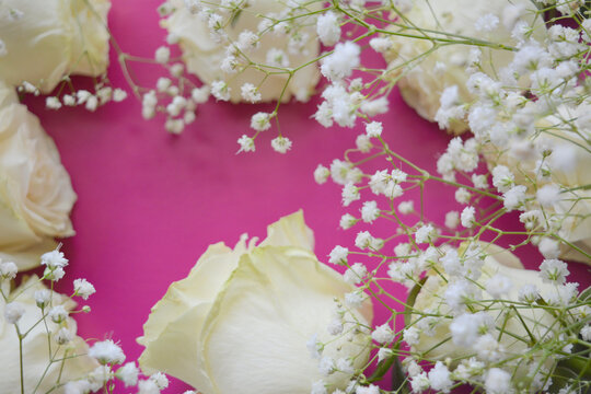 white  roses and  gypsophila  on a   pink   background.  gentle floral arrangement.