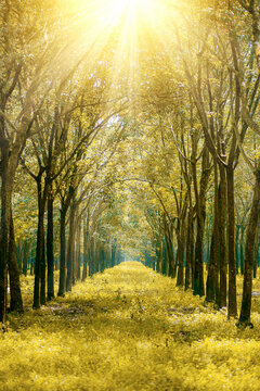 Scenic View Of Bright Sun Shining Through Trees