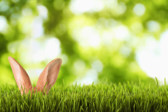 Cute Easter bunny hiding in green grass outdoors, space for text