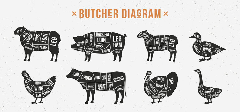 Butcher diagram, scheme set. Mutton, Lamb, Pork, Duck, Chicken, Turkey, Goose meat cuts. Cuts of meat set for butchery, meat shop, restaurant, grocery store. Vector illustration
