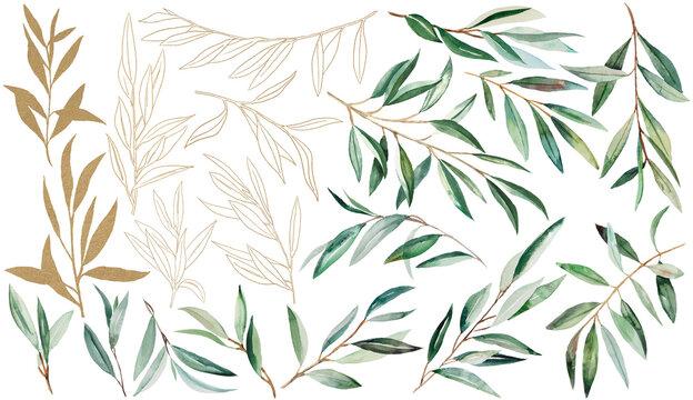 Watercolor Olive Branch Illustration