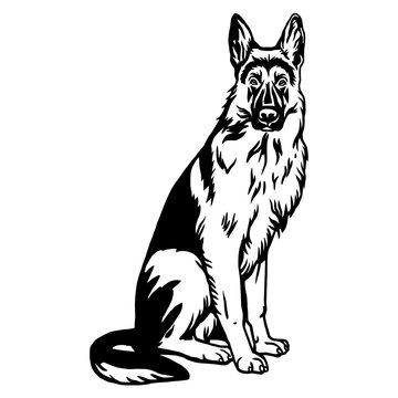 German Shepherd dog sitting pose- vector isolated illustration on white background