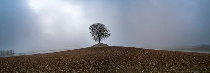 un arbre seul dans un panorama au milieu des champs