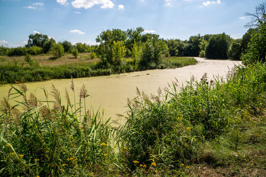 Beautiful summer countryside landscape with river overgrown with duckweed