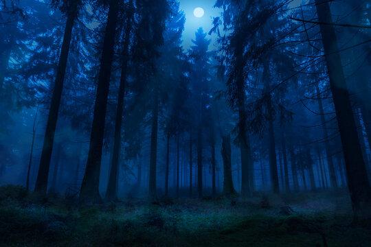 misty night forest