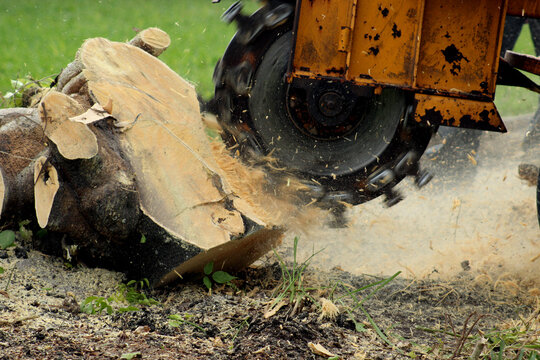 Stump Grinding with more depth perception