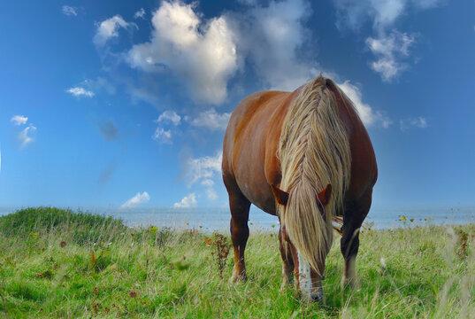 Braunes Pferd mit heller Mähne in traumhafter Landschaft