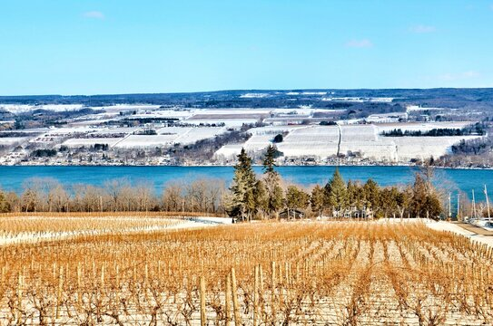 Winter Landscape with vineyard, mountains and Seneca Lake, in the heart of Finger Lakes Wine Country, New York