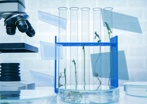 Genetically modified plant tested  .Ecology laboratory exploring new methods of plant breeding