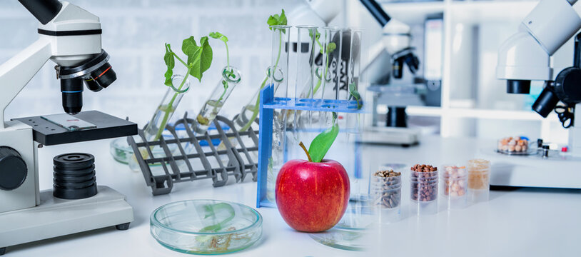 Chemical Laboratory of the Food supply . Food in laboratory, dna modify .GMO Genetically modified food in lab .Red Apple