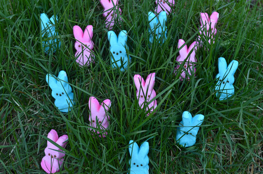 Pink And Blue Marshmallow Bunny Peeps For Easter In Green Grass