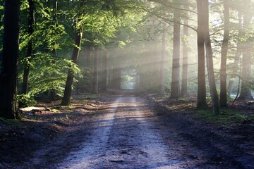 sunrise, park, forest