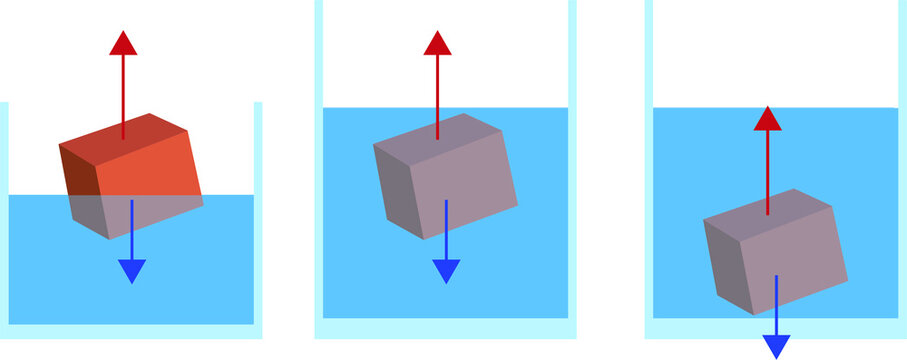 Vector Illustration of an Experiment, Eureka Can, Physics Experiment, Archimedes Law for Online Education