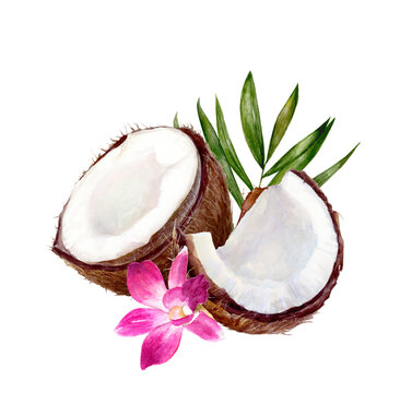Coconut composition watercolor illustration isolated on white background