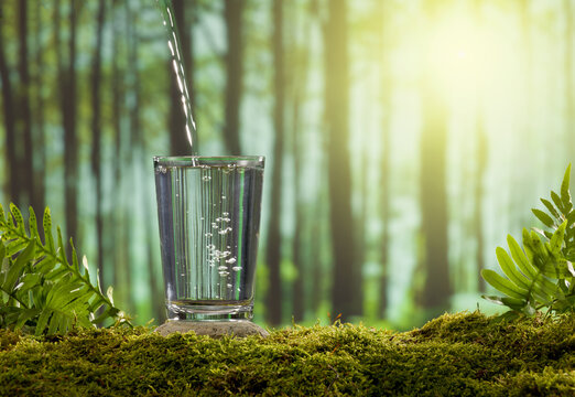 A glass of water on a moss covered stone. The forest background is blurred sunlight