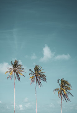 Tropical palm tree with blue sky and cloud abstract background. Summer vacation and nature travel adventure concept.
