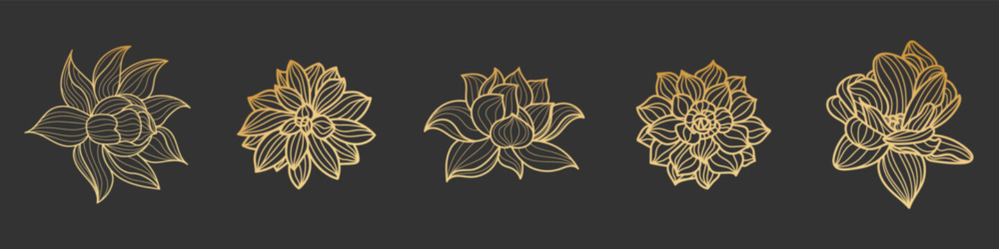 Set of gold lotus flower on a black background. Vector hand drawn illustration
