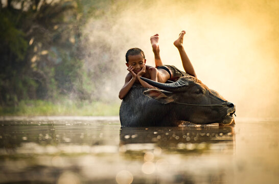 Boy Relaxing On Water Buffalo In Lake During Foggy Weather