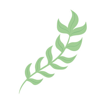 seaweed nature foliage sealife icon vector illustration design