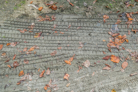Tire track imprints in the mud