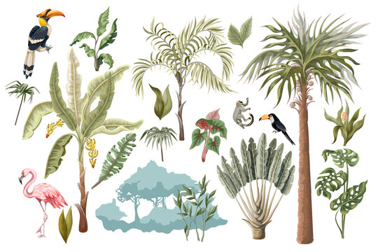 Jungle animals, flowers and trees isolated. Vector