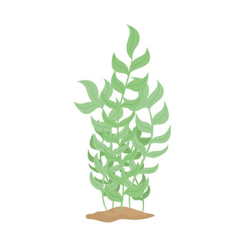 seaweed nature foliage sealife in sand vector illustration design